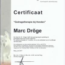DV diploma GT